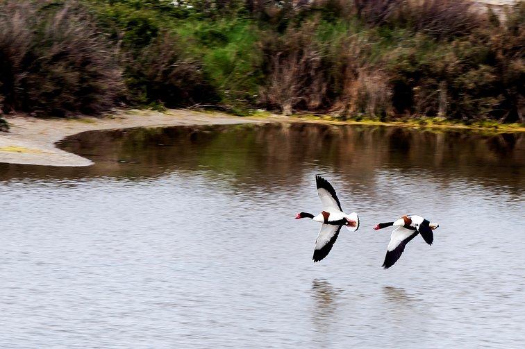Sortie oiseaux NOIRMOUTIER